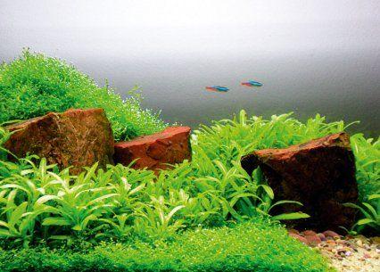 How to aquascape small tanks age of aquarium Pinterest