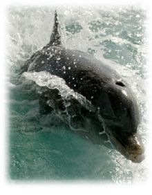 JoJo the Dolphin