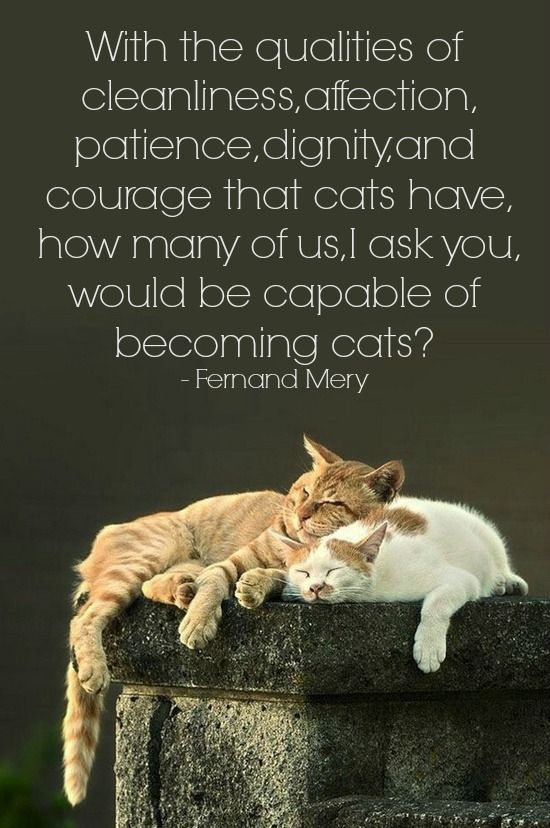 Quotes About Cats And Friendship Cat Friend Quot...