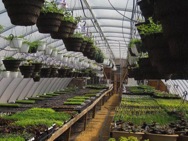 Best Greenhouse Design Ideas Images - Decoration Design Ideas ...