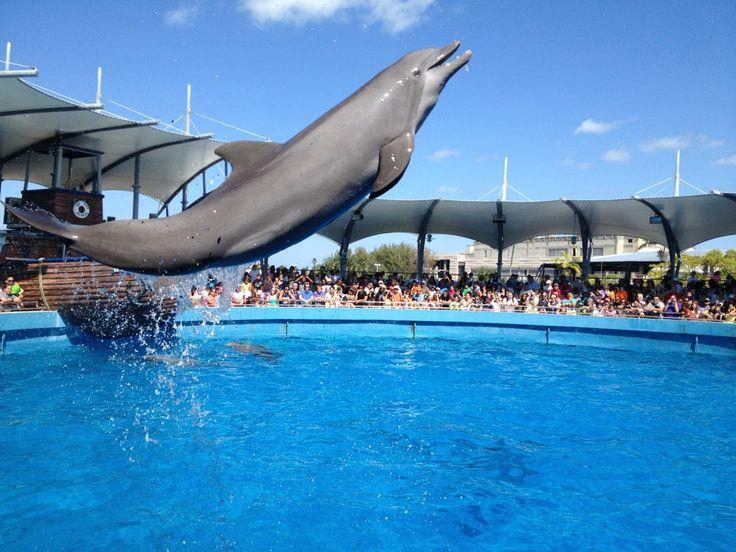 Miami Seaquarium Vaca Spots Pinterest