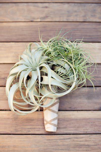 JL DESIGNS: an air plant bouquet