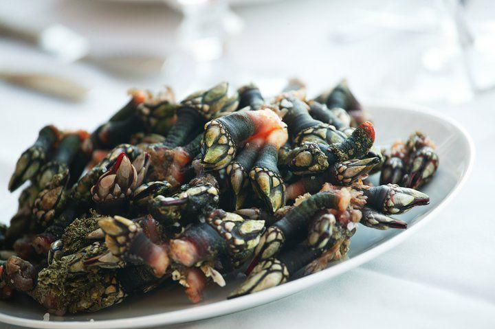 gotta love barnacles - Percebes de Aljezur, Algarve, Portugal