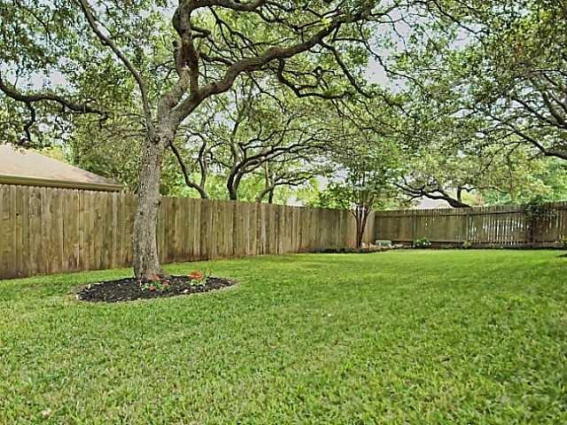 best shade trees backyard pinterest