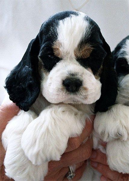adorable paws
