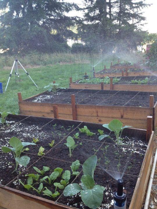 garden beds with sprinkler system garden irrigation pinterest