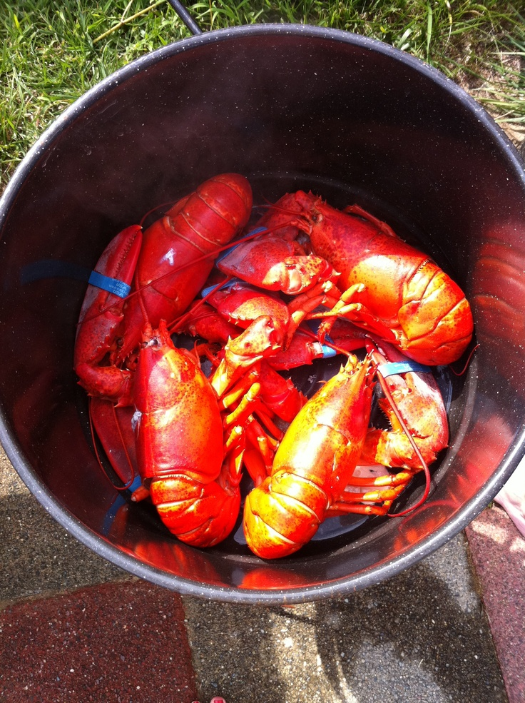 backyard lobster boil. | Yum | Pinterest
