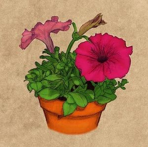 Growing petunias in pots gardening ideas pinterest - Growing petunias pots balconies porches ...