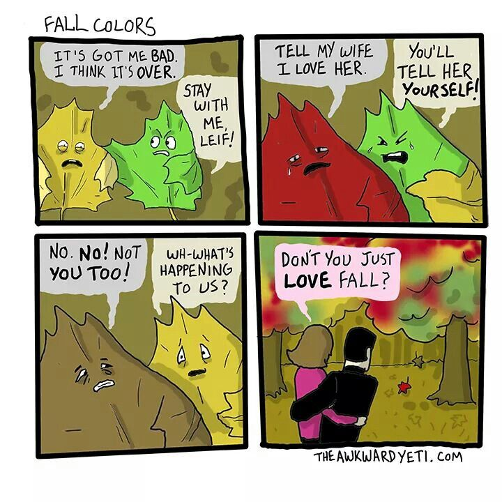 It's All About Perspective #fall Humor