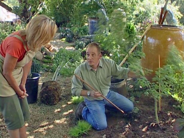 PARACHA FARM: The Right Way to Plant a Tree