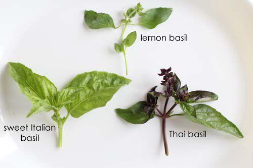 Spicy Basil Beef Salad