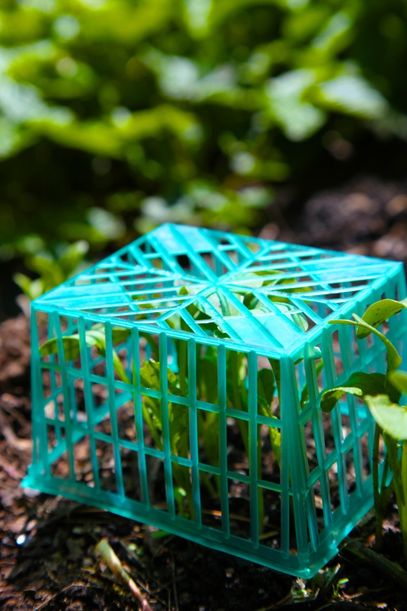 See what surprising everyday items can be reused to enhance your gardening.