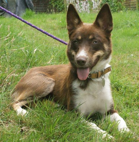 ... at Allsorts Dog Rescue #kelpie | Dogs: Rare Breeds in Rescue