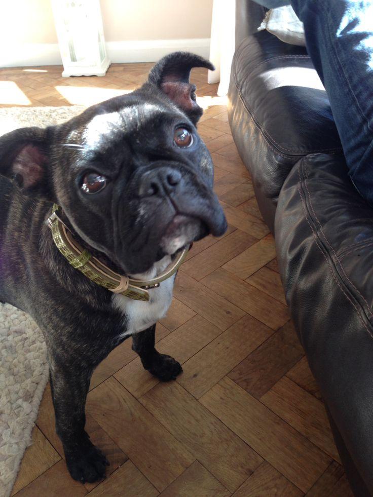 French Bull dog. Frenchie | Dogs | Pinterest