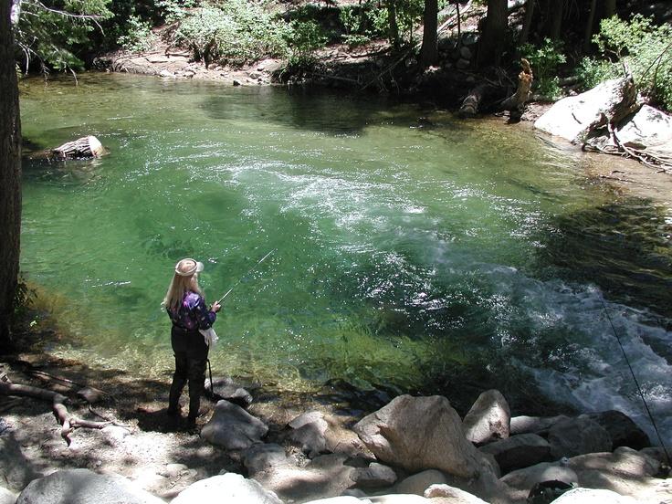 Lee vining creek lee vining california high sierras for Franks great outdoors fishing report