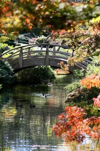 Ft Worth Botanical Gardens Inspiring Or Beautiful Pinterest