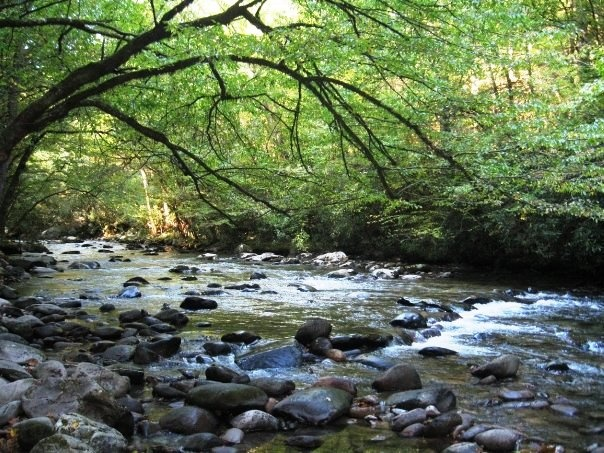 Little pigeon river smoky mountains tn places i love for Fishing in gatlinburg tn