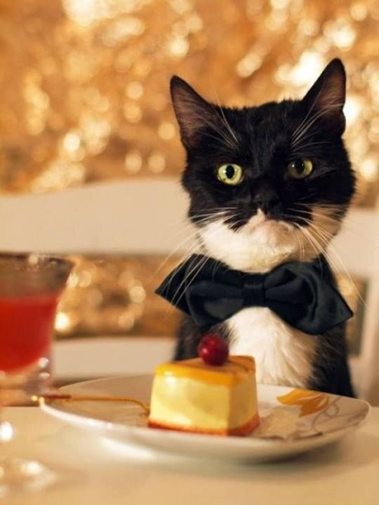 Cat Eating Caramel