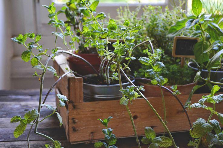 herbes aromatiques jardinage pinterest. Black Bedroom Furniture Sets. Home Design Ideas