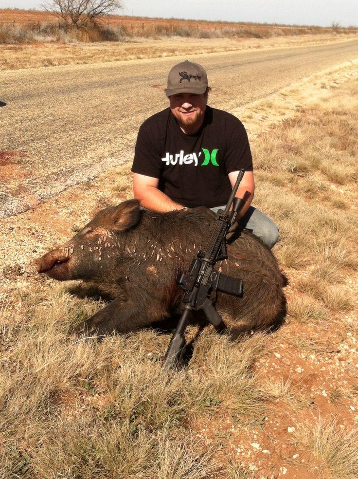 Texas Hog Hunts