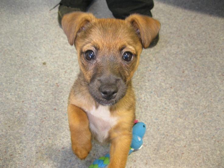 Yo-yo - 11 week old terrier cross. Call Dogs Trust Shoreham on 01273 ...