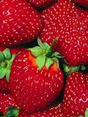 Primavera di baccelli e fragole  I mercati di Campagna Amica.  Prodotti di stagione e locali in 60 mercati sparsi in tutta la Toscana.