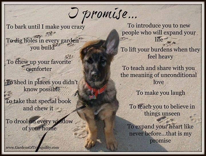 Dogs unconditional love quotes quotesgram - German Shepherd Quotes Poems Quotesgram