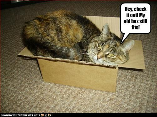 """Hey, check it out! My old box still fits!"" # cat, funny"