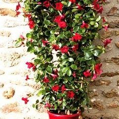 Conseil planter ses grimpantes deco jardin diy - Mur vegetal pour balcon ...