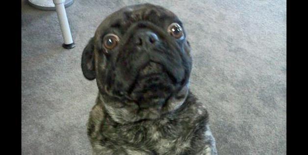 A worried dog (UsedCarMan via Reddit) | Dogs I Fancy ...