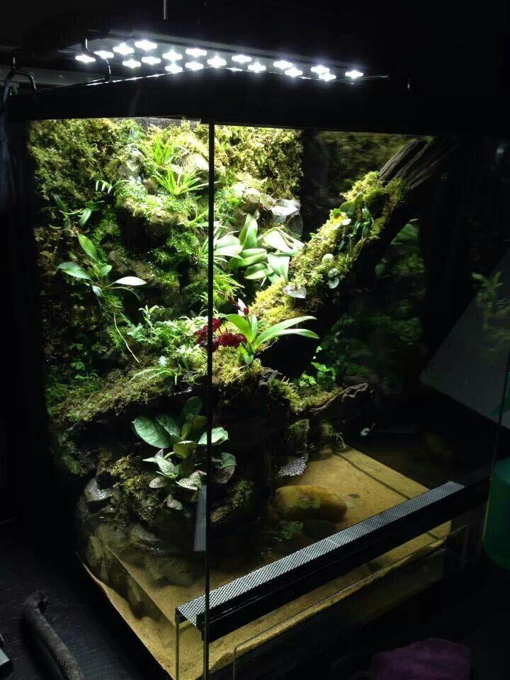 how to set up a paludarium