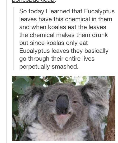 best designer purses Hi Im a koala and Im high as fuck  Beauty tips