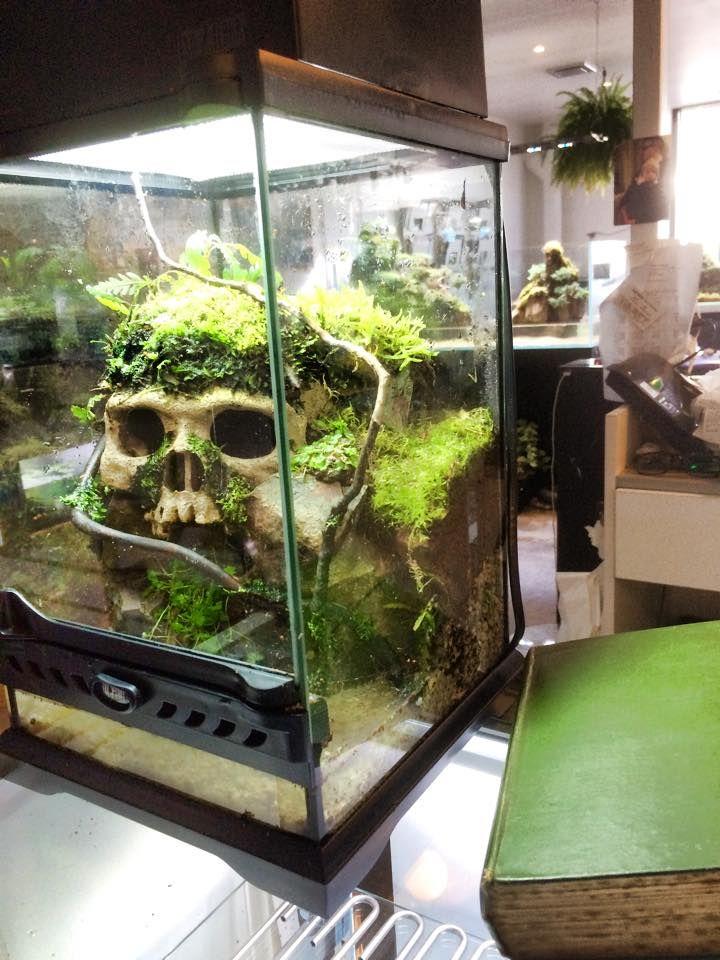 Как сделать аквариум для террариума 905