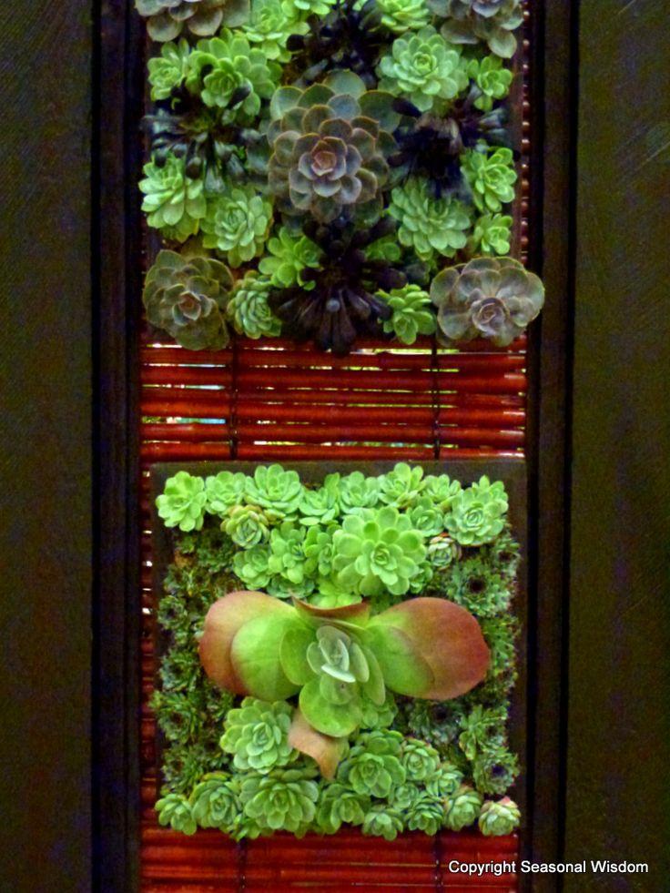 Living walls of vertical succulent garden. Love succulents....so wonderful.
