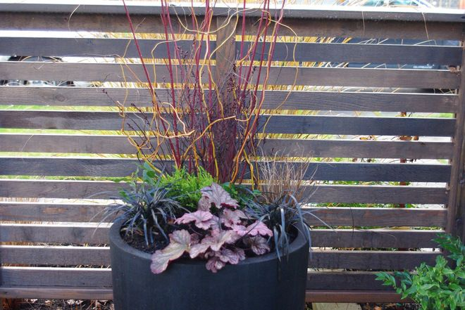 Idea for winter container planting Garden Ideas Pinterest