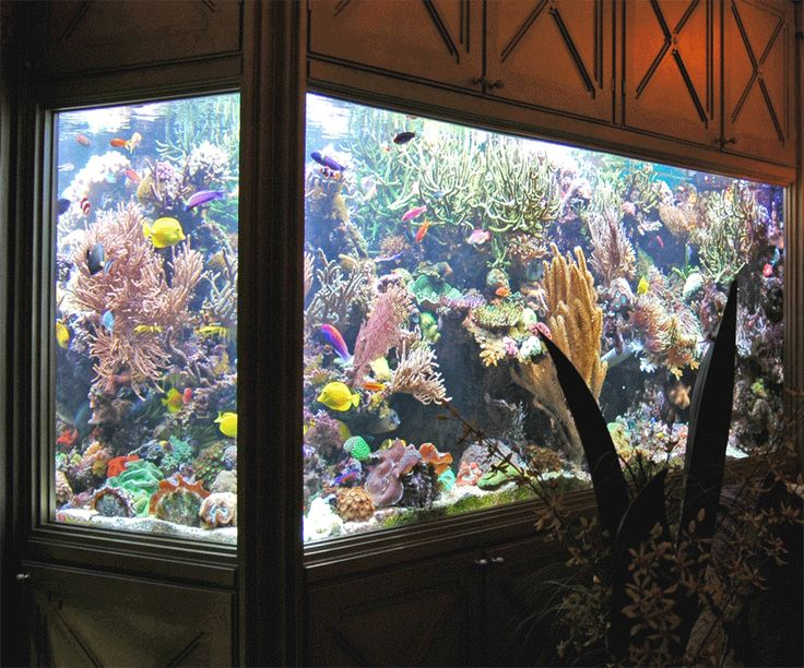 Nice example of a reef tank! FISH AQUARIUMS Pinterest