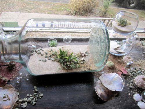 succulent garden in an oversized jar