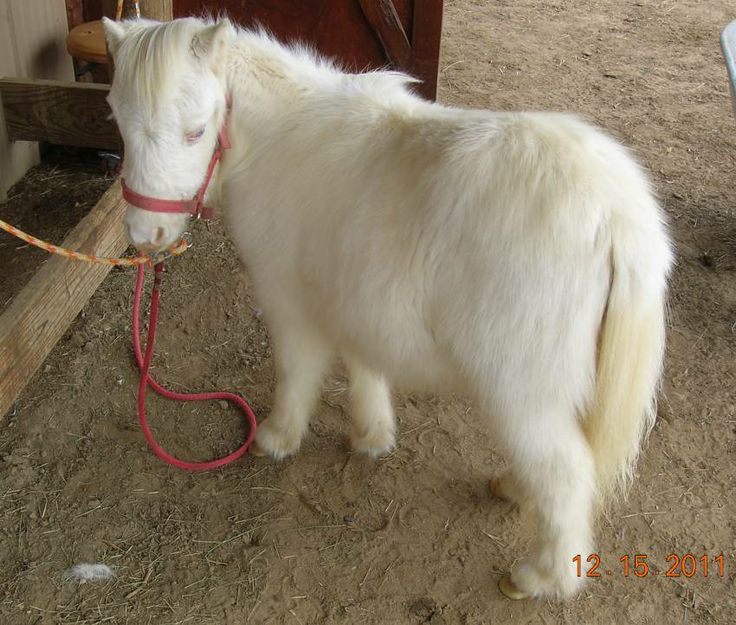 fluffy horses - photo #22