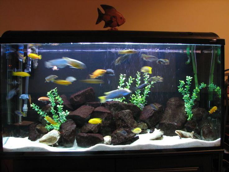 Betta Fish Tanks  LoveToKnow