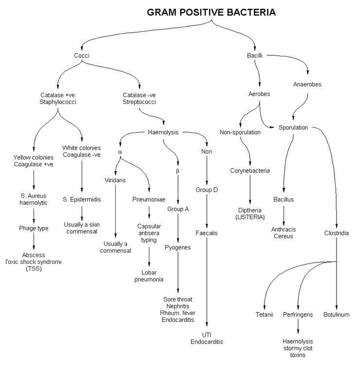 Examples Of Gram Negative Cocci Bacteria B Bp 2018