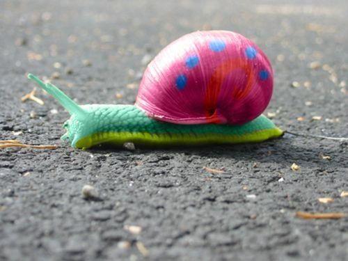 Color+Splash+Love color splash snail A little Color.... Pintere ...