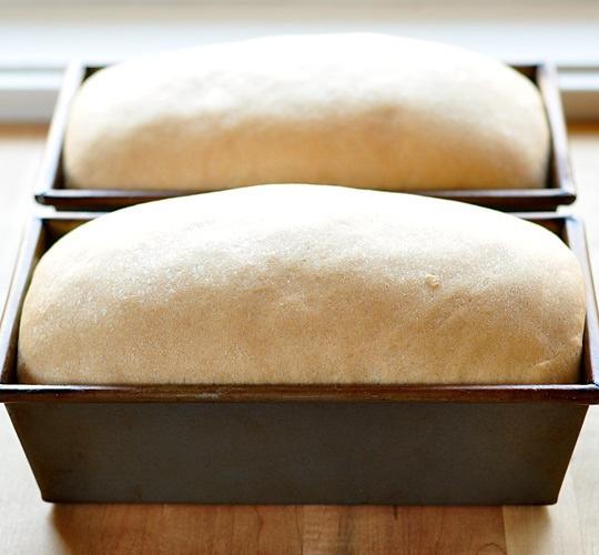 Basic Whole Wheat Bread | Recipe