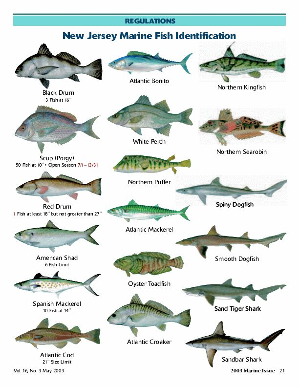 Marine fish with names cars with fish names 2017 fish for Names of fish