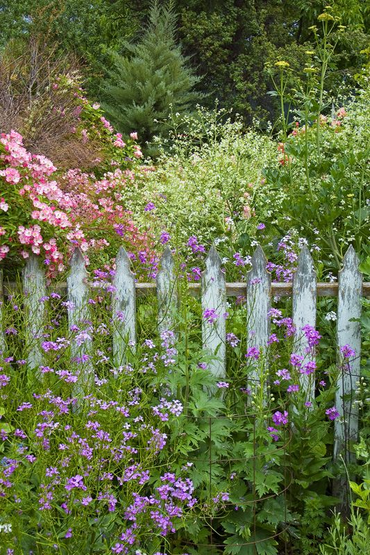 rustic fence and wild flowers garden the cottage