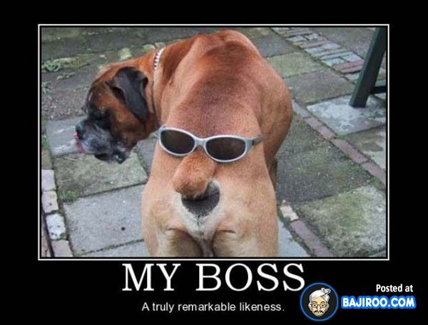Funny Boss Man Meme : Pin by maru on cosas chistosas funny pinterest