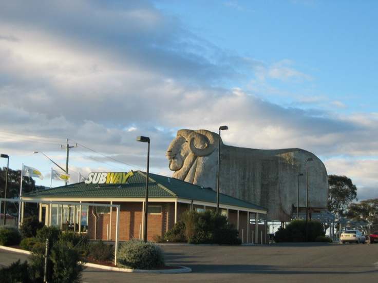 Goulburn Australia  city photos : The Big Merino in Goulburn, Australia | Goulburn | Pinterest