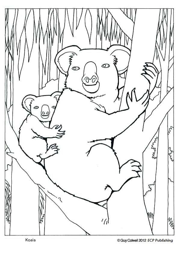 Coloring Pages Koala : Koala coloring pages colouring pictures koalas
