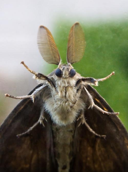Cute moth tumblr - photo#24