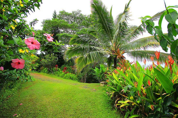 tropical gardens of maui island garden life
