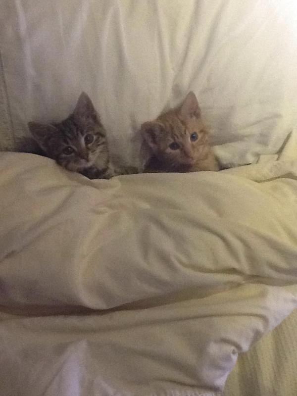 tucked in for bed funny pics pinterest